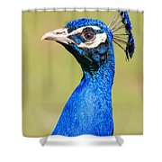 Peacock - 2 Shower Curtain