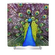 Peacock Art Shower Curtain