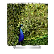 Peacock At Frankenmuth Michigan Shower Curtain