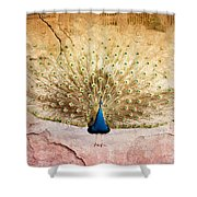 Peacock Bird Textured Background Shower Curtain