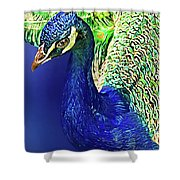 Peacock Blued Shower Curtain
