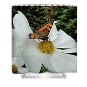 Peacock Butterfly On Cosmos Shower Curtain