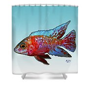 Peacock Cichlid Shower Curtain