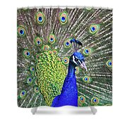 Peacock Colors Shower Curtain