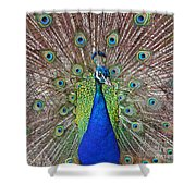 Peacock Displaying His Plumage Shower Curtain