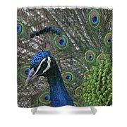 Peacock Enhanced Shower Curtain