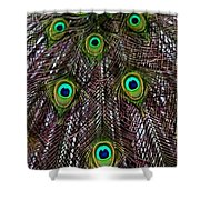 Peacock Feathers Upside Down Shower Curtain