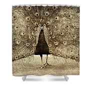 Peacock Grunge Shower Curtain