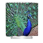 Peacock In A Oak Glen Autumn 2 Shower Curtain