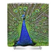 Peacock In A Oak Glen Autumn 3 Shower Curtain