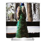 Peacock In The Snow Shower Curtain