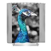 Peacock Luminance Shower Curtain