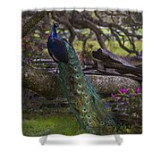 Peacock On The Plantation Shower Curtain