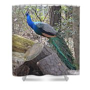 Peacock On Woodpile Shower Curtain