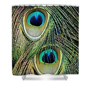 Peacock Pavo Cristatus Feather Detail Shower Curtain