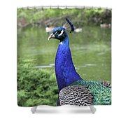 Peacock Portrait #3 Shower Curtain
