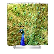 Peacock Prancing Shower Curtain