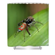 Peacock Spider Shower Curtain