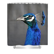 Peacock Stare Down Shower Curtain