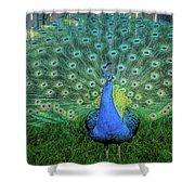 Peacock1 Shower Curtain
