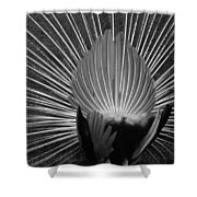 Peacocks Ass Original Shower Curtain