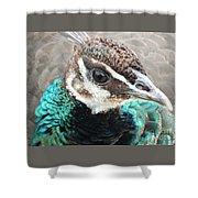 Peacocks Eye View Shower Curtain