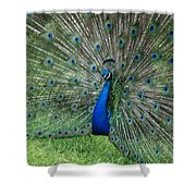 Peacocks Glory Shower Curtain