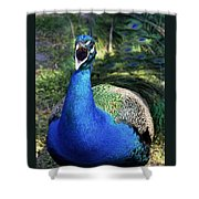 Peacocks Squawk Shower Curtain