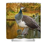 Peahen In Autumn Shower Curtain