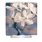 Pear Blossoms 4 Shower Curtain