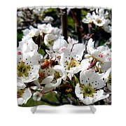 Pear Blossoms And Bee Shower Curtain