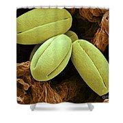 Pear Pollen Grains, Sem Shower Curtain