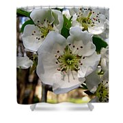 Pear Tree Blossoms 3 Shower Curtain