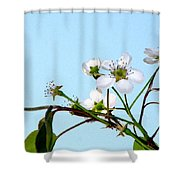 Pear Tree Blossoms 4 Shower Curtain