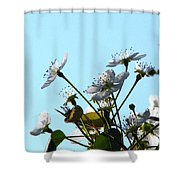 Pear Tree Blossoms 5 Shower Curtain