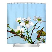 Pear Tree Blossoms 6 Shower Curtain
