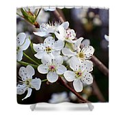 Pear Tree Blossoms II Shower Curtain