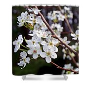Pear Tree Blossoms IIi Shower Curtain