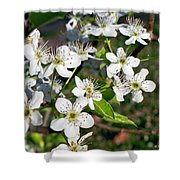 Pear Tree Blossoms Iv Shower Curtain