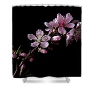 Peach Tree Blossum Shower Curtain