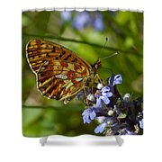 Pearl-bordered Fritillary Shower Curtain