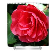 Pearl Of Beauty - Red Camellia Shower Curtain