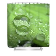 Pearls On Leaf 3 Shower Curtain