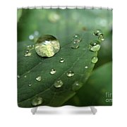 Pearls On Leaf 5 Shower Curtain