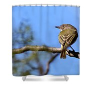 Pearly-vented Tody-tyrant Shower Curtain