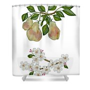 Pears And Pear Blossoms Shower Curtain