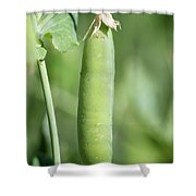 Pea's In A Pod Shower Curtain