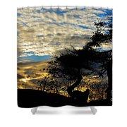 Pebbles Beach Pine Tree Shower Curtain