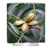 Pecan Cluster Shower Curtain