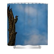 Pecking Away Shower Curtain